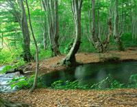 ブナ林と中島台・獅子ヶ鼻湿原 出壷の湧水