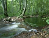 ブナ林と獅子ヶ鼻湿原 出壷の湧水