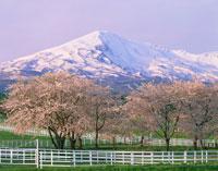 桜咲く牧場と鳥海山 鳥海高原