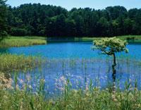 夏の五色沼の弁天沼 磐梯高原
