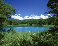 夏の五色沼の弁天沼