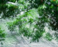 光る苔の流れ 獅子ヶ鼻湿原