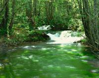 苔の流れと夏の森 獅子ヶ鼻湿原