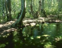出壷の湧水とブナ林 獅子ヶ鼻湿原