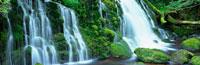 元滝の伏流水 みちのくあじさい園