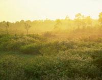 コナシ咲く朝霧の駒止湿原