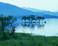 新緑の桧原湖と木々 磐梯高原