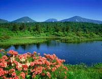 ツツジ咲く睡蓮沼と八甲田山