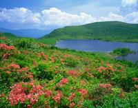 レンゲツツジ咲く雄国沼