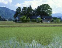 散居村の民家と水田