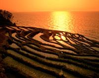 白米千枚田と夕日の海