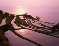 朝の千枚田と海