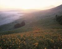 キスゲ咲く朝霧の霧ケ峰