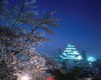 桜と鶴ケ城夜景