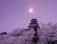 桜と鶴ケ城夕景