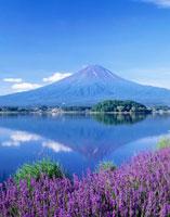ラベンダーと河口湖に映る逆さ富士 25234011009| 写真素材・ストックフォト・画像・イラスト素材|アマナイメージズ