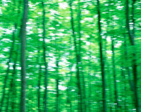 ブナ林新緑の流れる風景八甲田