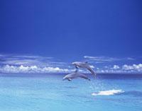 青い海とイルカ