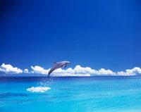 イルカと海