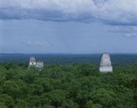 ティカル神殿群と密林