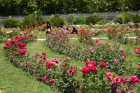 エラム庭園