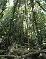 中東部オーストラリア雨林 ラミントン国立公園