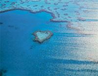 ハート型のサンゴ礁