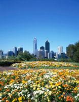 春のキングスパークより市街9月 パース オーストラリア 25315013416| 写真素材・ストックフォト・画像・イラスト素材|アマナイメージズ