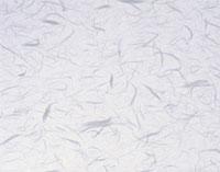 白の雲龍紙