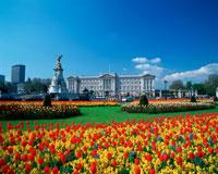 バッキンガム宮殿と花壇 25333002384| 写真素材・ストックフォト・画像・イラスト素材|アマナイメージズ