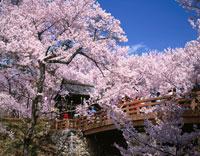 桜咲く高遠城