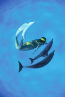 マダライルカと泳ぐダイバー