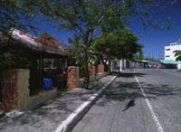 町の中を歩く海イグアナサンタクルス島