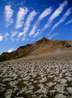 火山灰上に生育するティキリア
