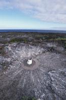 アオツラカツオドリの巣