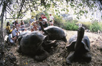 ダーウィン研究所のゾウガメ 25356000435| 写真素材・ストックフォト・画像・イラスト素材|アマナイメージズ
