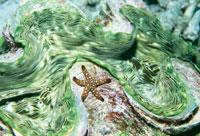 シャコ貝とヒトデ