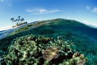サンゴとヤシの小島