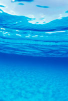 ドルフィンサイトの水中