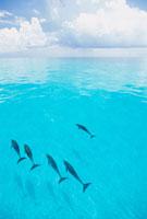ベタ凪の海とイルカの群