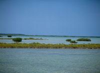 フロリダキーのマングローブ