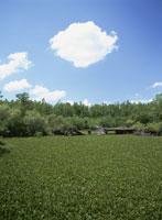 ネイプルズ付近の湿地帯