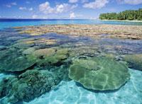 カロリン島前のサンゴ礁