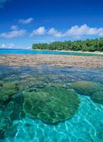 カロリン島前のサンゴ礁 25356000838| 写真素材・ストックフォト・画像・イラスト素材|アマナイメージズ