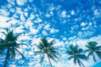 雲とヤシの木 25356001137| 写真素材・ストックフォト・画像・イラスト素材|アマナイメージズ