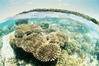 浅瀬のサンゴ マジュロ環礁 25356001152| 写真素材・ストックフォト・画像・イラスト素材|アマナイメージズ
