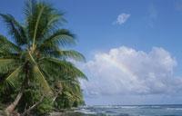 虹とヤシの木 25356001261| 写真素材・ストックフォト・画像・イラスト素材|アマナイメージズ