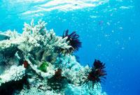 青い海とサンゴ 25356001278| 写真素材・ストックフォト・画像・イラスト素材|アマナイメージズ