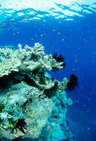 青い海とサンゴ 25356001279| 写真素材・ストックフォト・画像・イラスト素材|アマナイメージズ