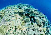 サンゴ礁 25356001281| 写真素材・ストックフォト・画像・イラスト素材|アマナイメージズ